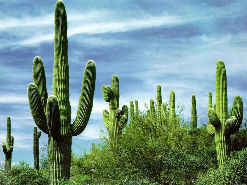 LAND cactus