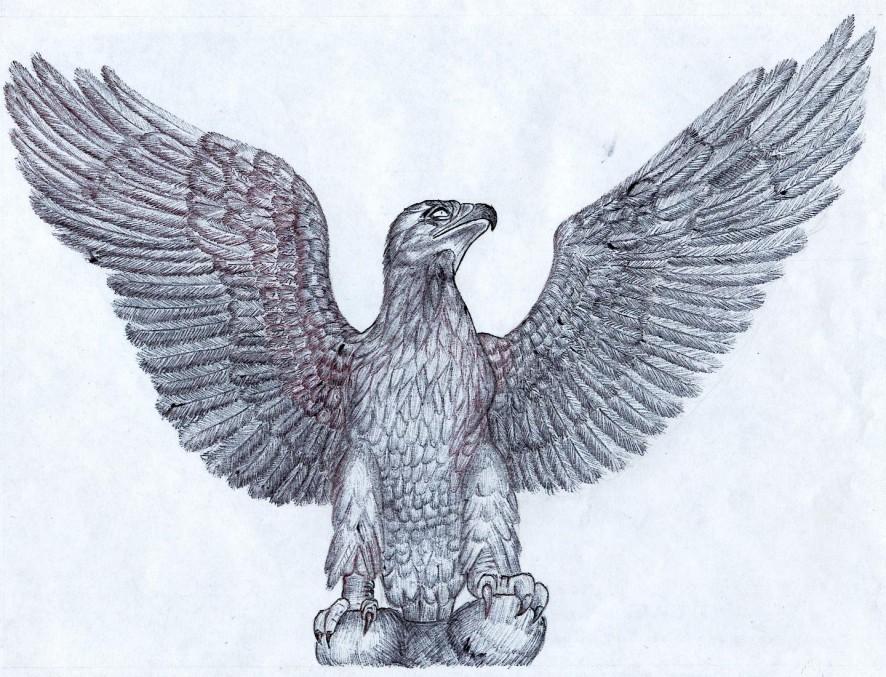 aigle 1
