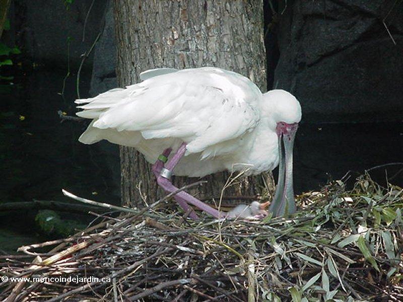 oiseau 23