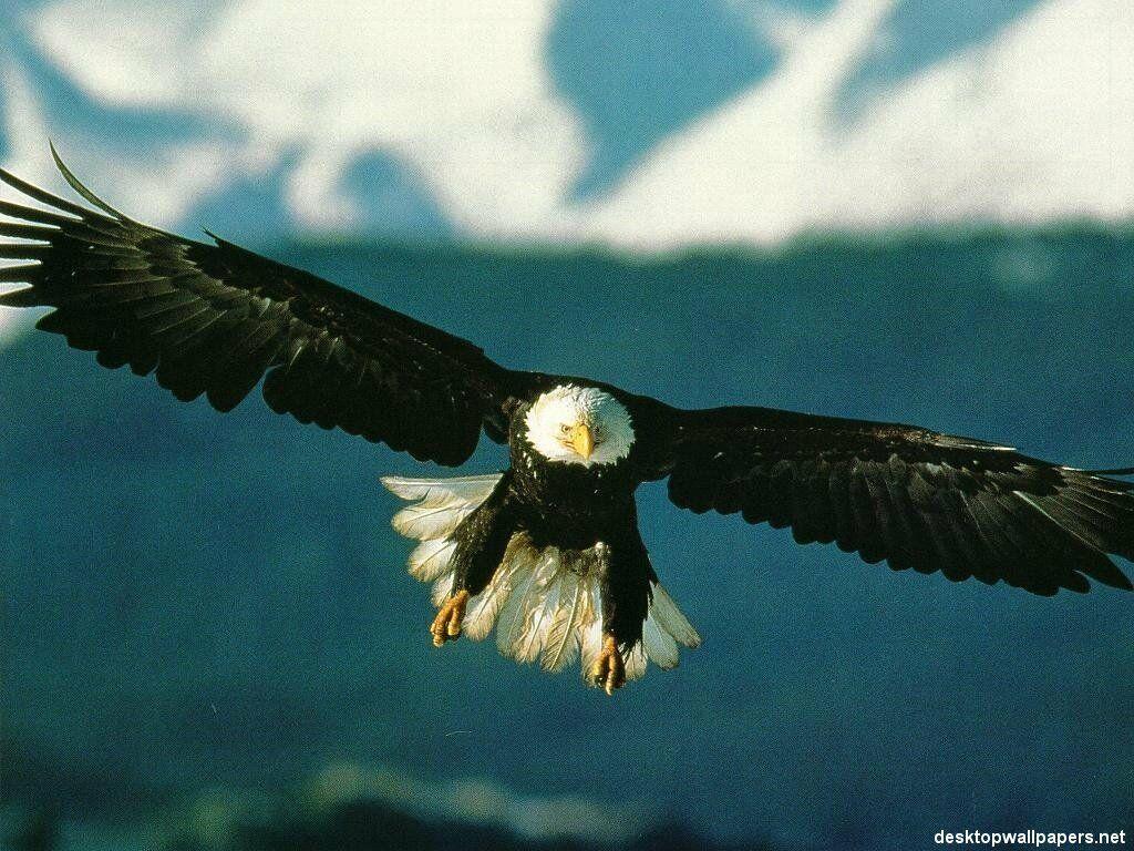 oiseau 27