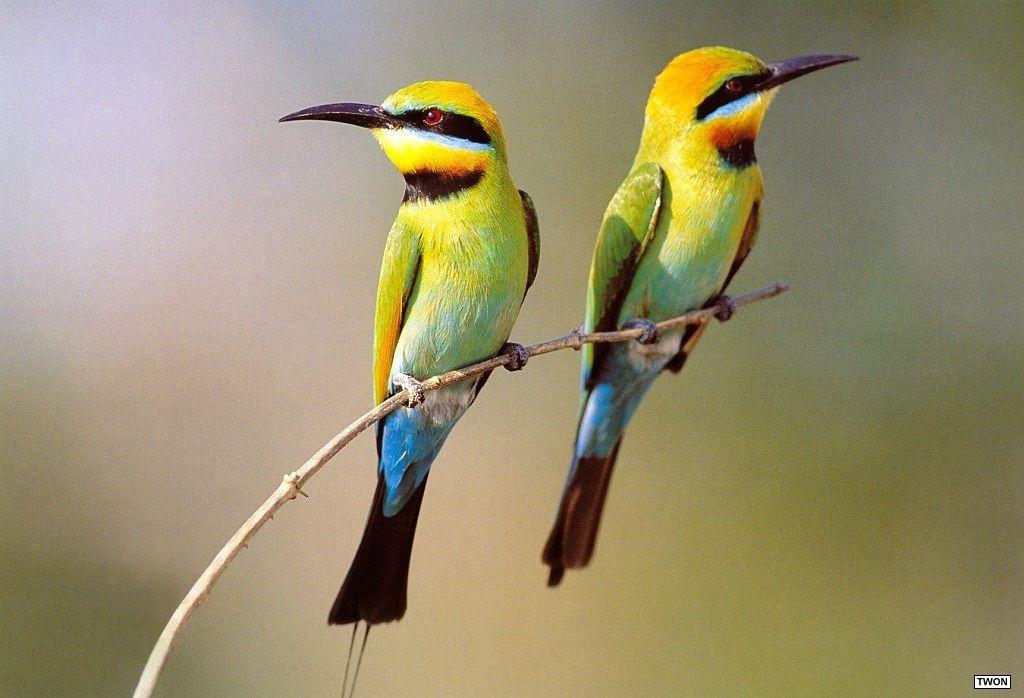 oiseau 31