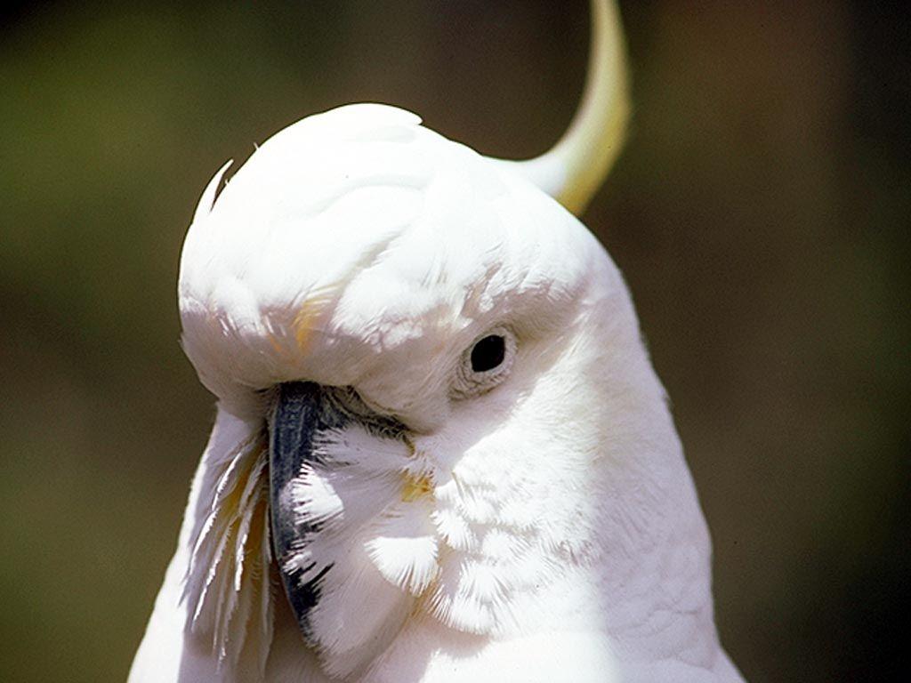 oiseau 32