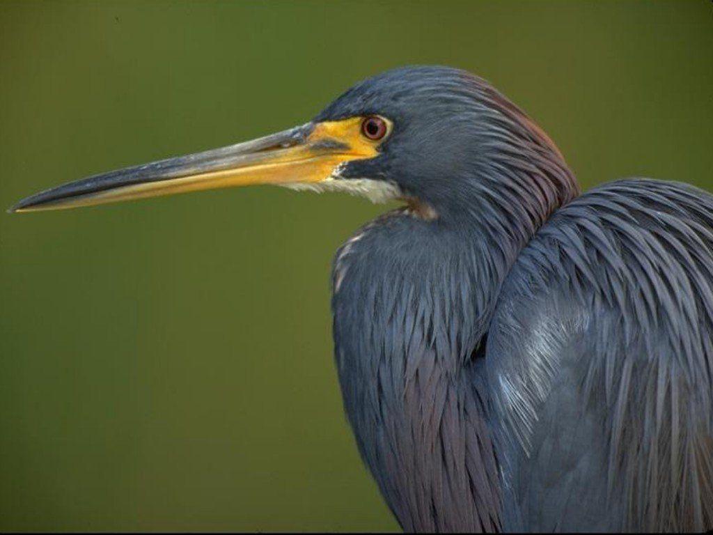 oiseau 35