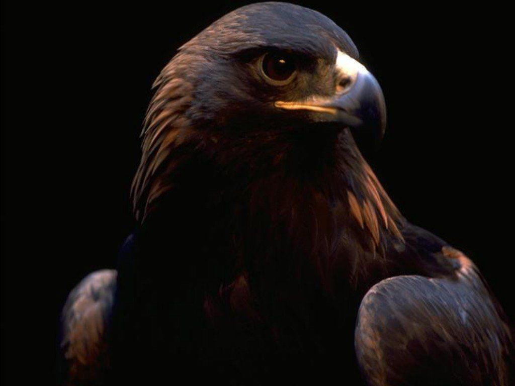 oiseau 36