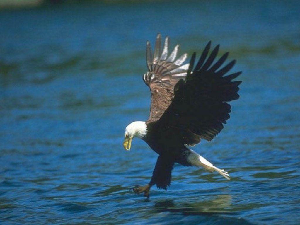 oiseau 38