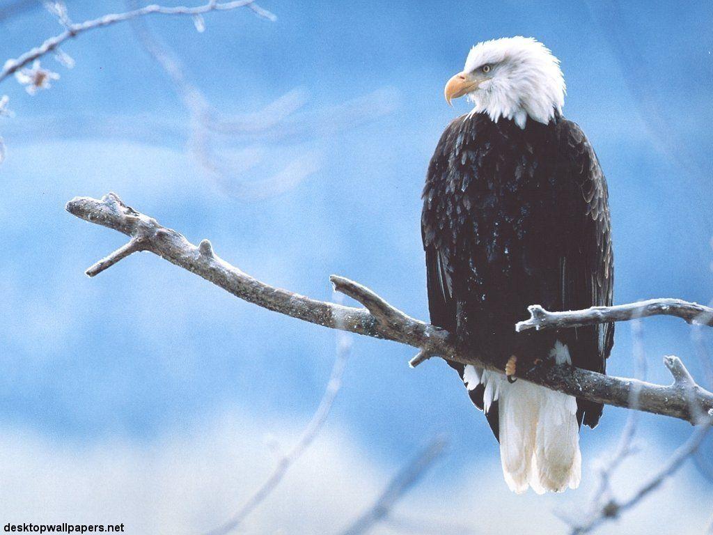 oiseau 40