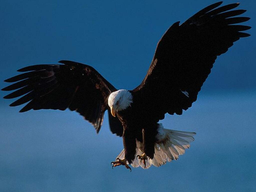 oiseau 41