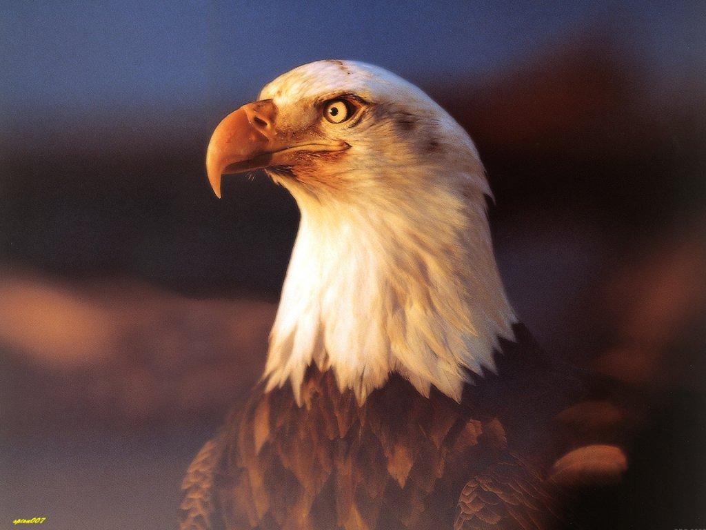 oiseau 42