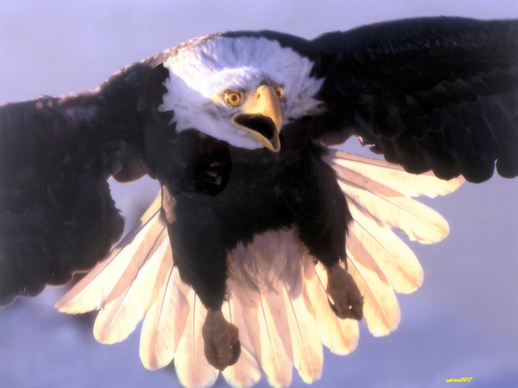 oiseau 43