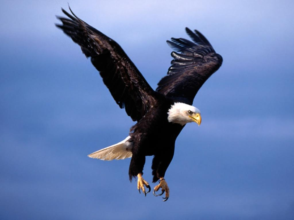 oiseau 47