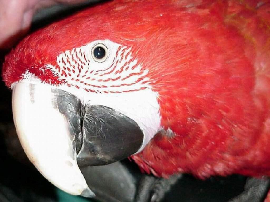 oiseau 49