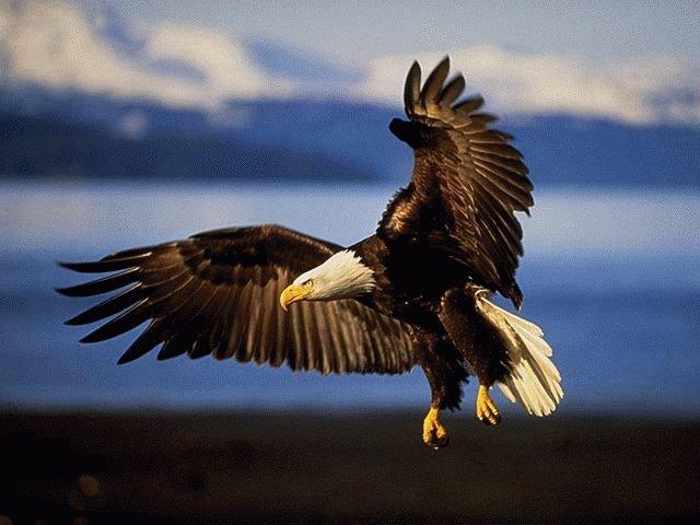 oiseau 9