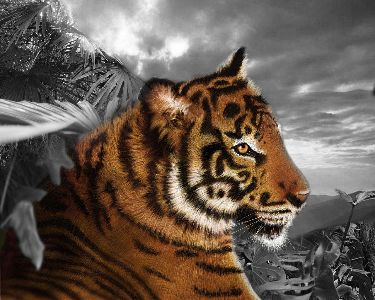 tigre 23