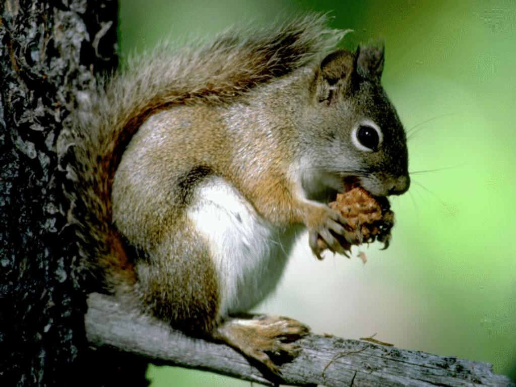 ecureuil 6