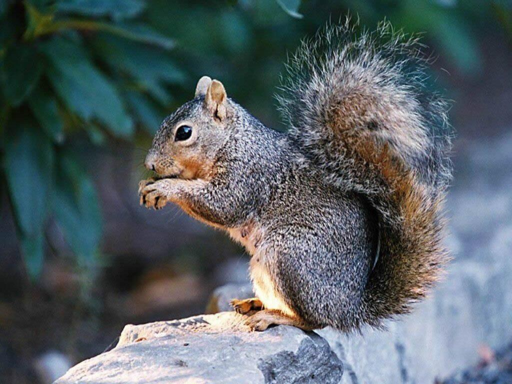 ecureuil 8