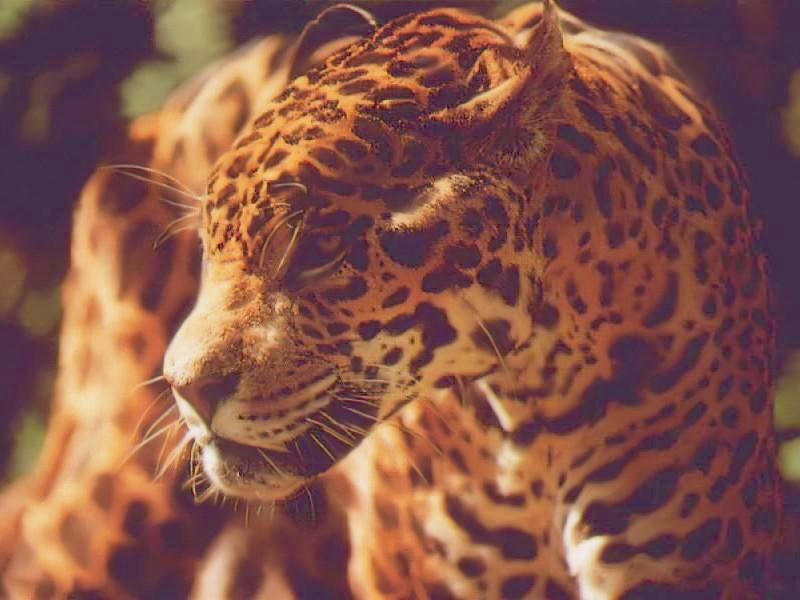 jaguar 5