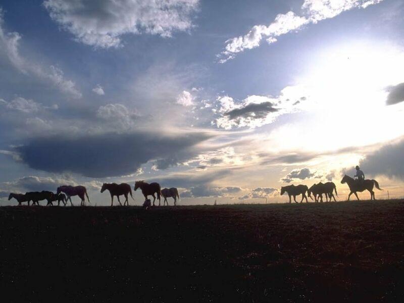 chevaux 12