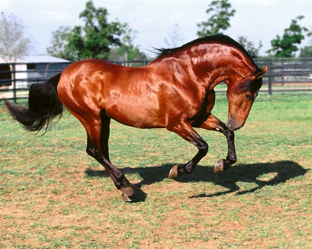 chevaux 13