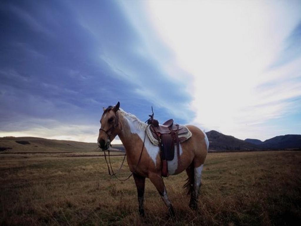 chevaux 15