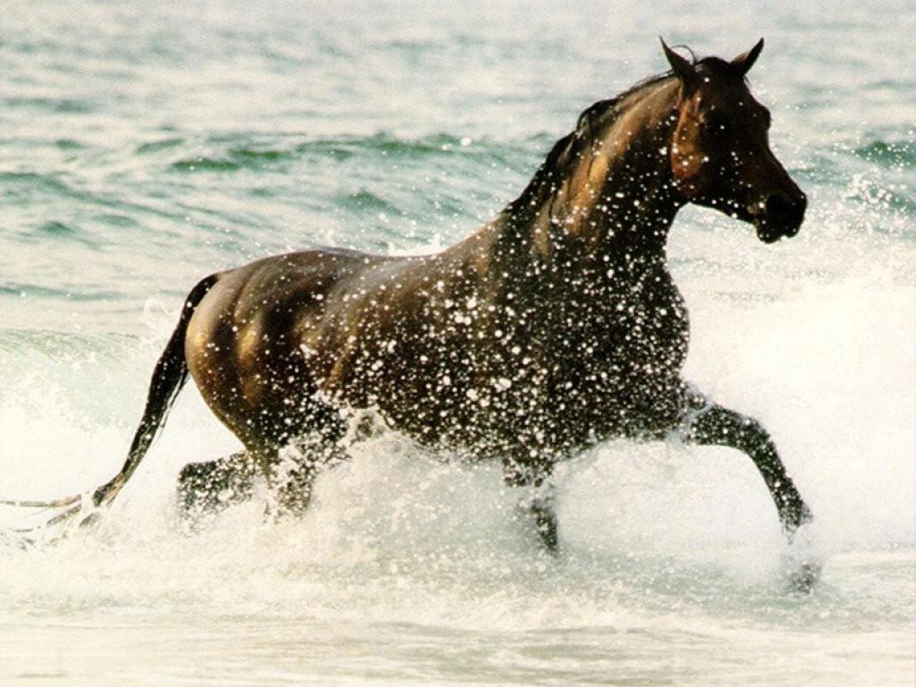 chevaux 20