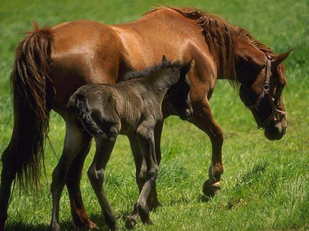 chevaux 21