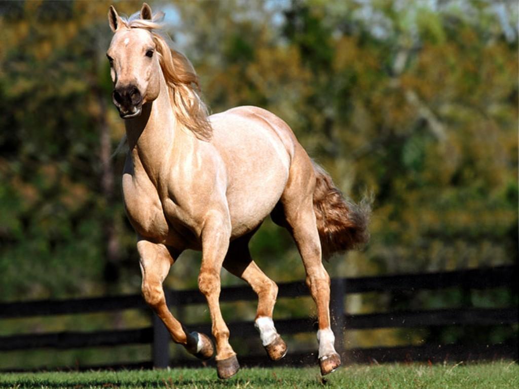 chevaux 22