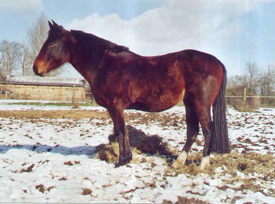 chevaux 25