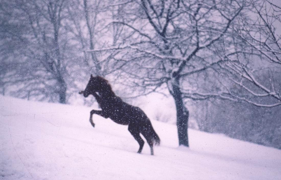 chevaux 26