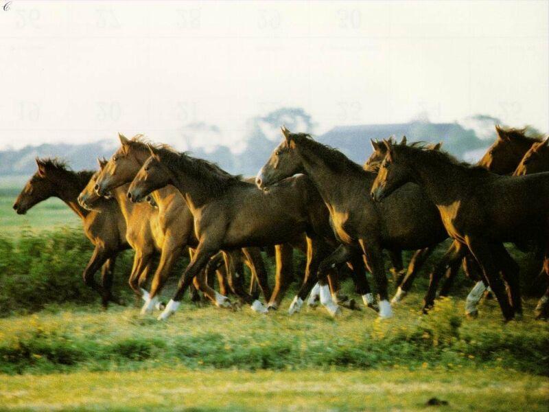 chevaux 4