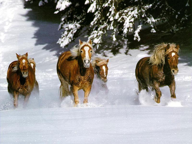 chevaux 7